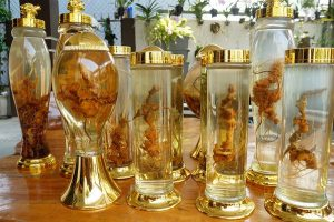 Hướng dẫn cách ngâm rượu Sâm Ngọc Linh 1