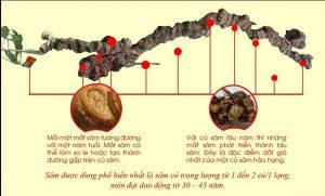 Tại sao nói Sâm Ngọc Linh - thần dược của nam giới 1