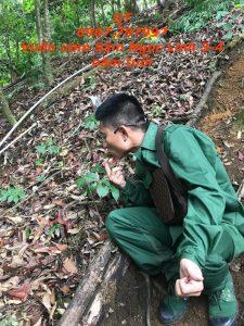 Vườm ươm Sâm Ngọc Linh tại Nam Trà My