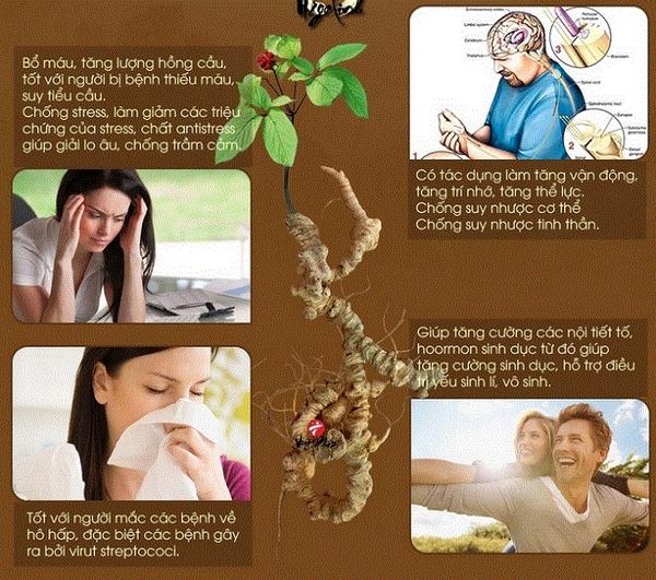 Sâm Ngọc Linh hỗ trợ điều trị bệnh gì hiệu quả ˇ